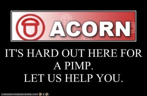 Acorn still pimpin'